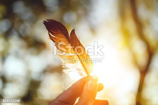 Feather and sunset