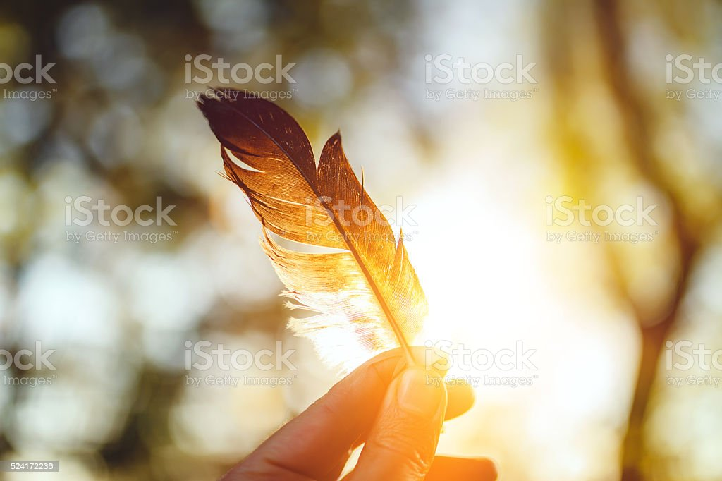 Feather and sunset stock photo