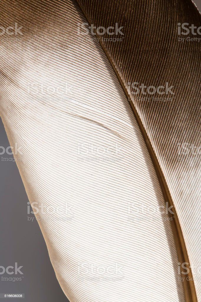 Feather background stock photo