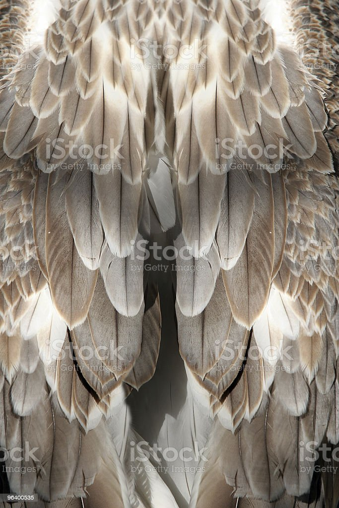 Feather background - Royalty-free Animal Stock Photo