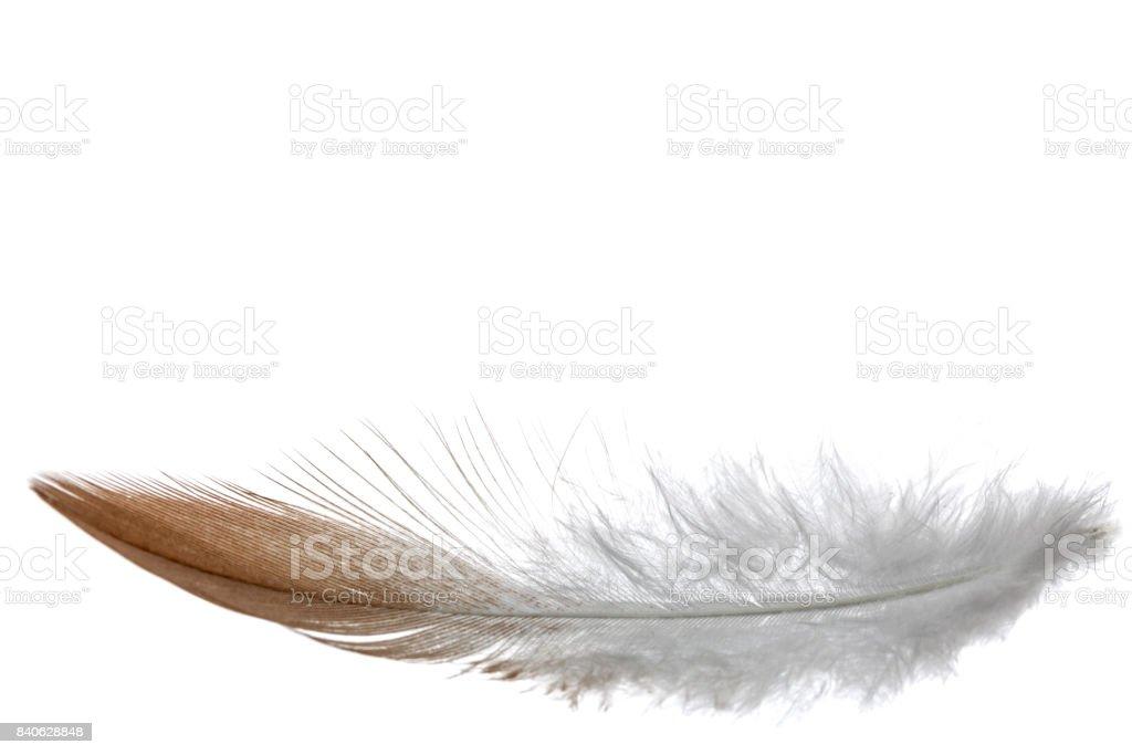 Feather bird , isolated on white background stock photo
