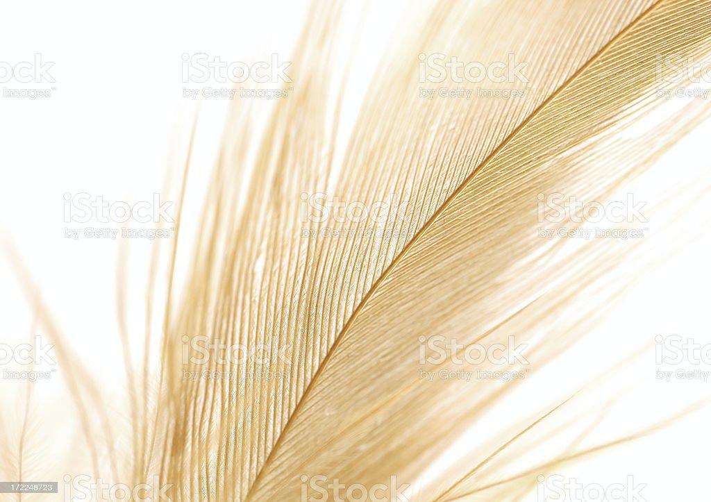 Feather closeup royalty-free stock photo