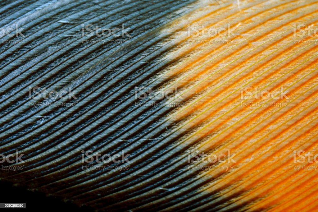 feather closeup stock photo