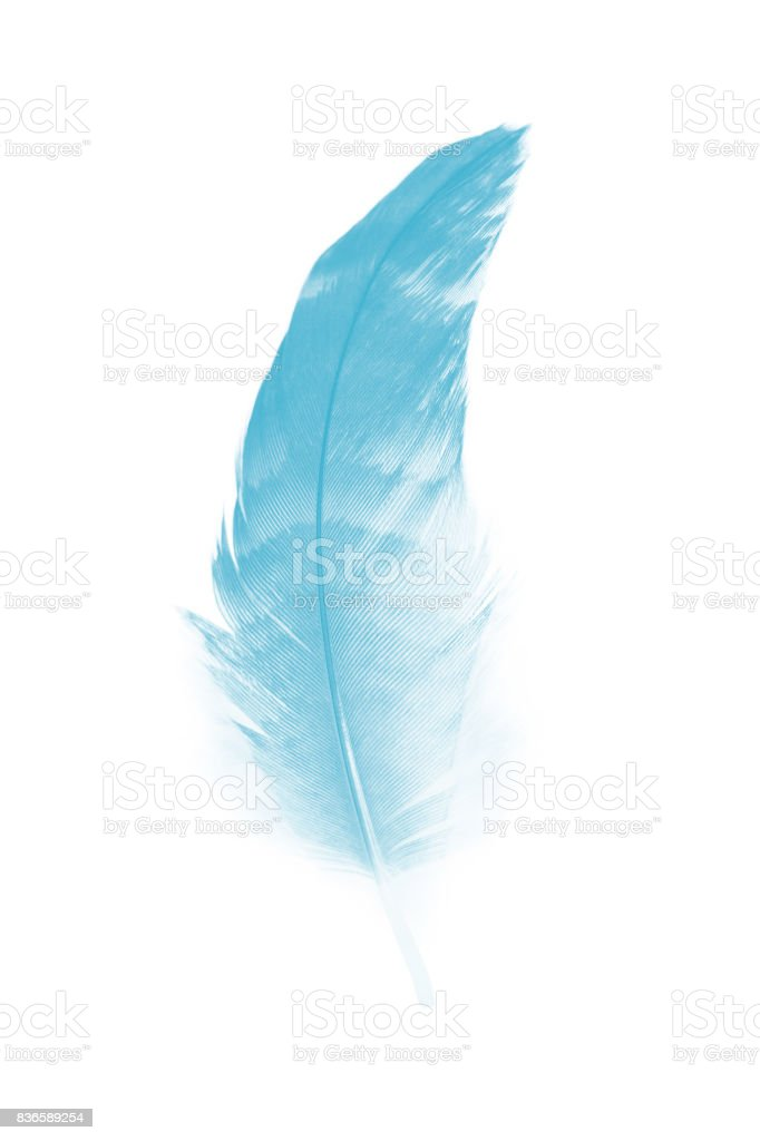 feather color turquoise emerald green on white background stock photo