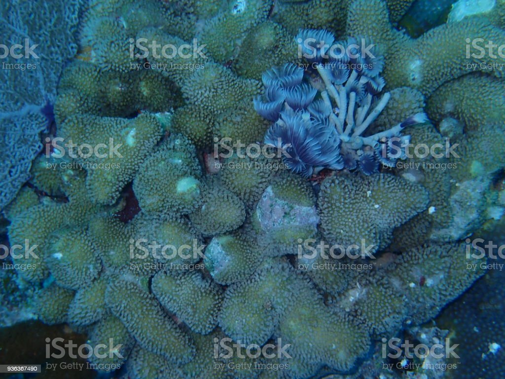 Feather Duster Tube Worm Stock Photo & More Pictures of Animal | iStock