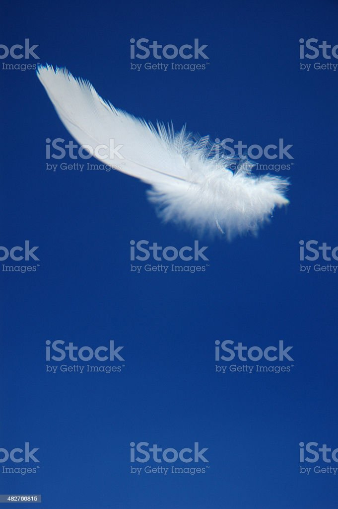 Feather Floating stock photo