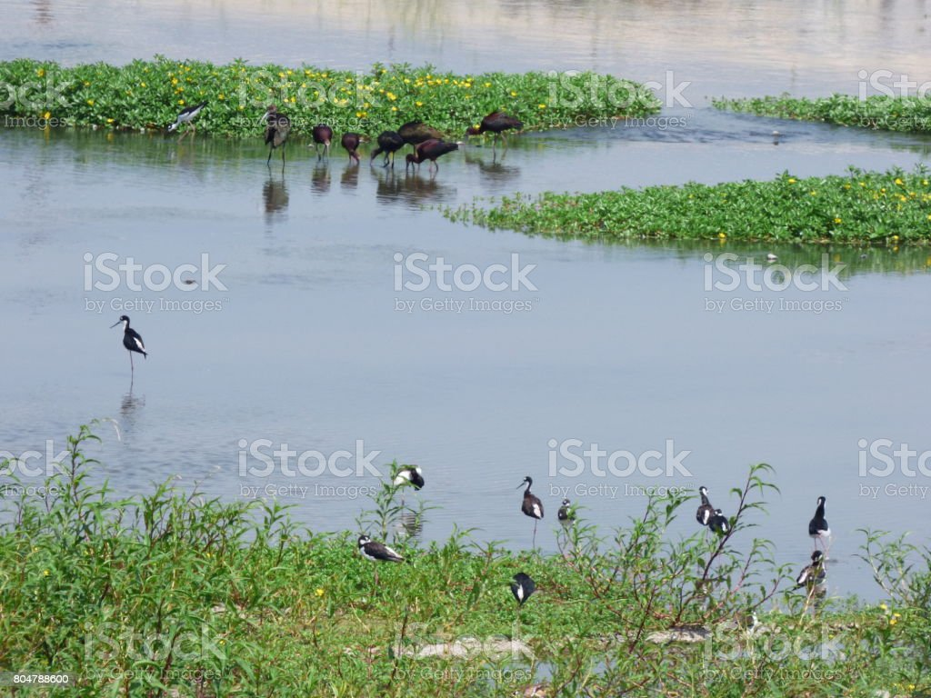 Feather flock together. stock photo