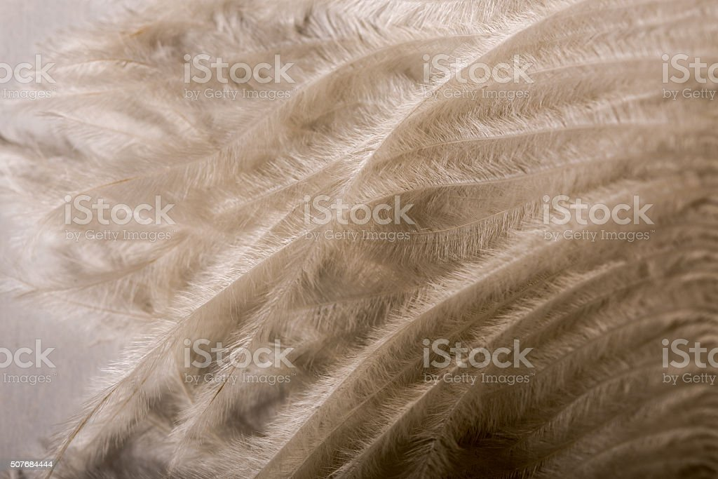 Feather fluff texture. stock photo