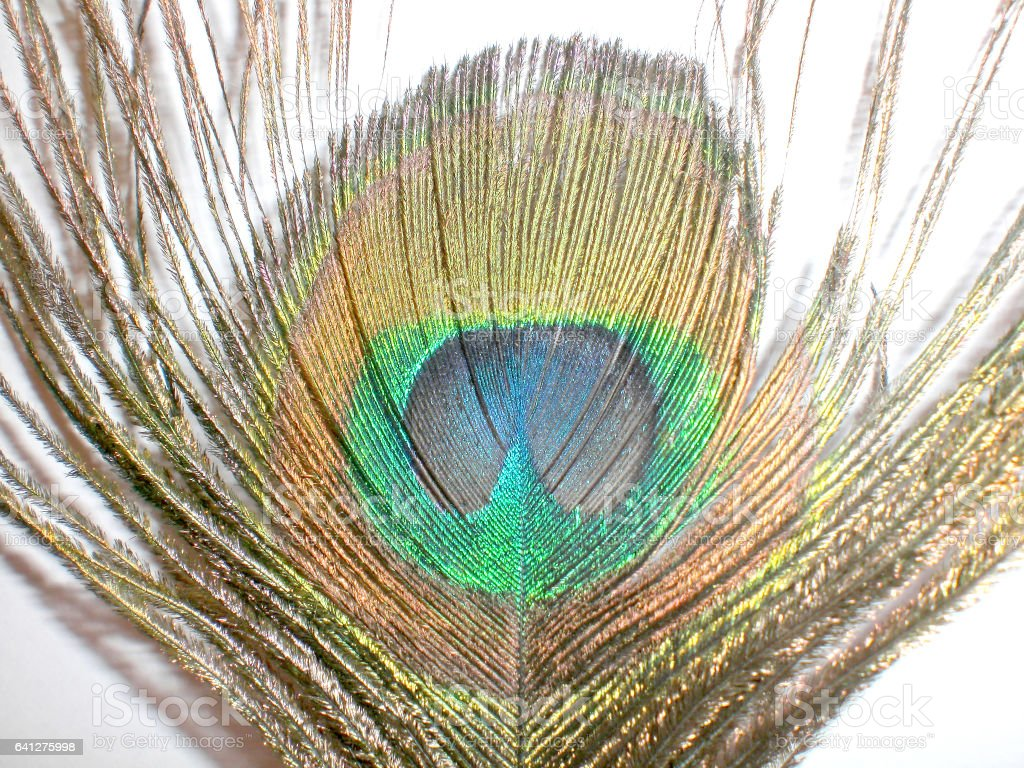 Feather heat of a bird stock photo