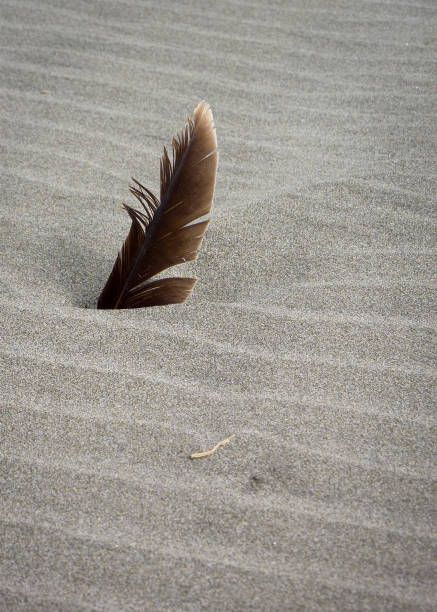 Feder im Strandsand – Foto