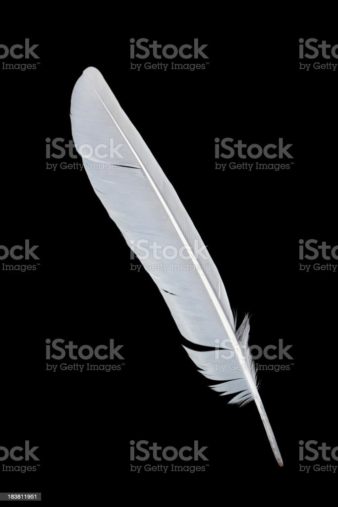 Feather on black background stock photo