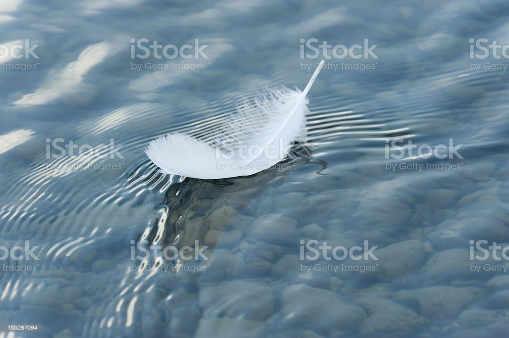 Feather on surface of the water stock photo