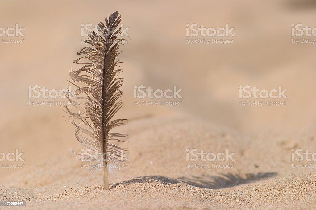 Feather am Strand – Foto