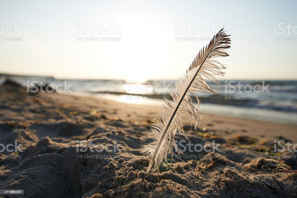 Feather on the Beach stock photo