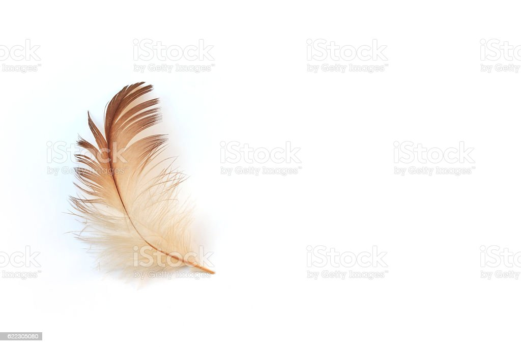 feather on white background stock photo