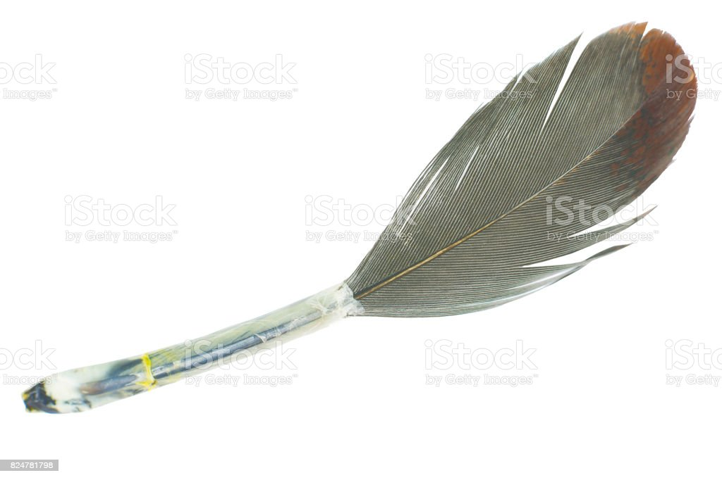 feather on white background stock photo