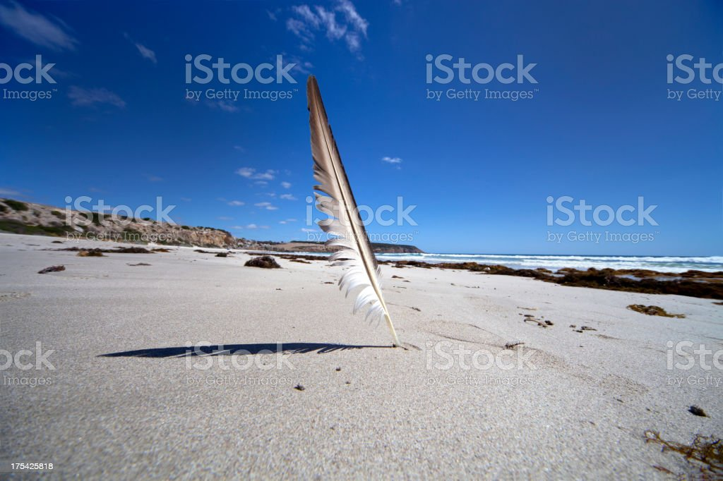 Feather on white sand stock photo