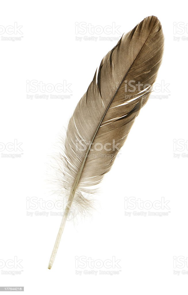 Feather pen royalty-free stock photo