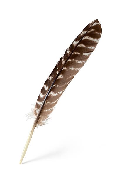 feather - feder stock-fotos und bilder