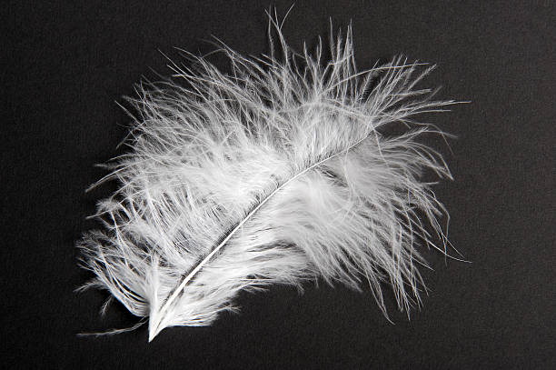 feather – Foto
