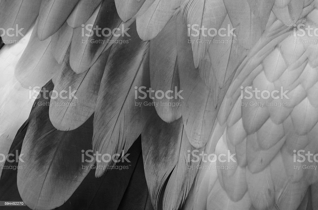 Feather texture stock photo