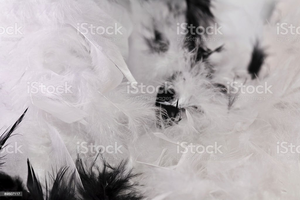 Feathered Floor royalty-free stock photo