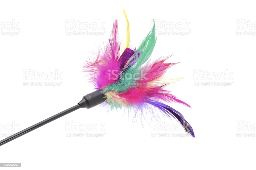 Feathered Pole Cat Toy stock photo