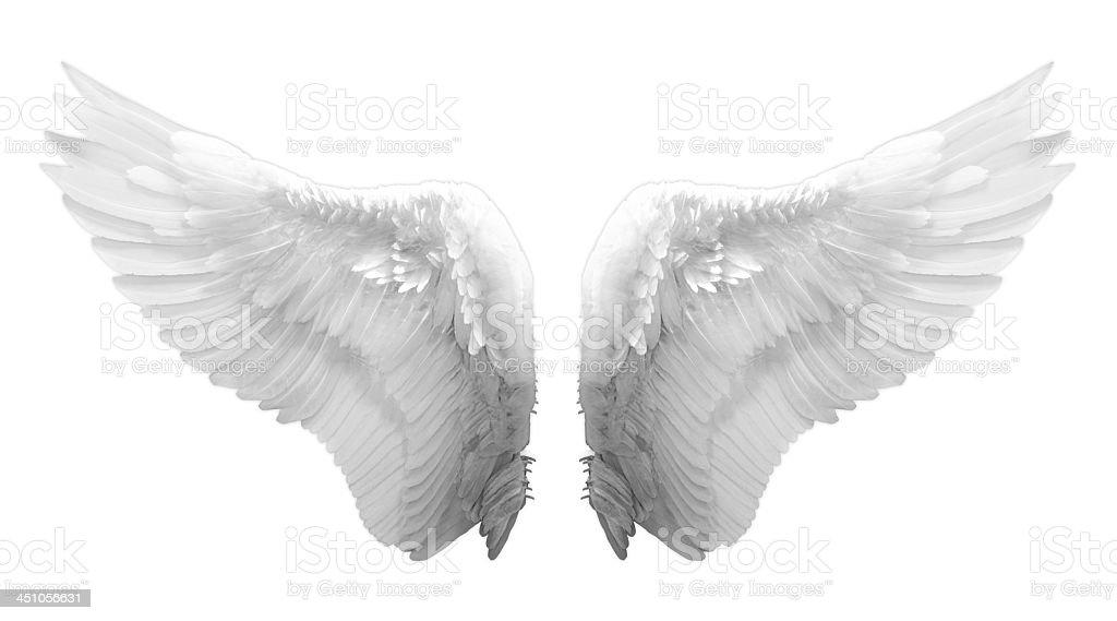 Blanco alas de ángel aislado - foto de stock