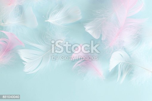 istock feathers abstract background. Background for design with soft colorfull feathers pattern. Soft fluffy feathers on turquoise, day dreaming concept. feather texture background Interior soft luxury 831040040