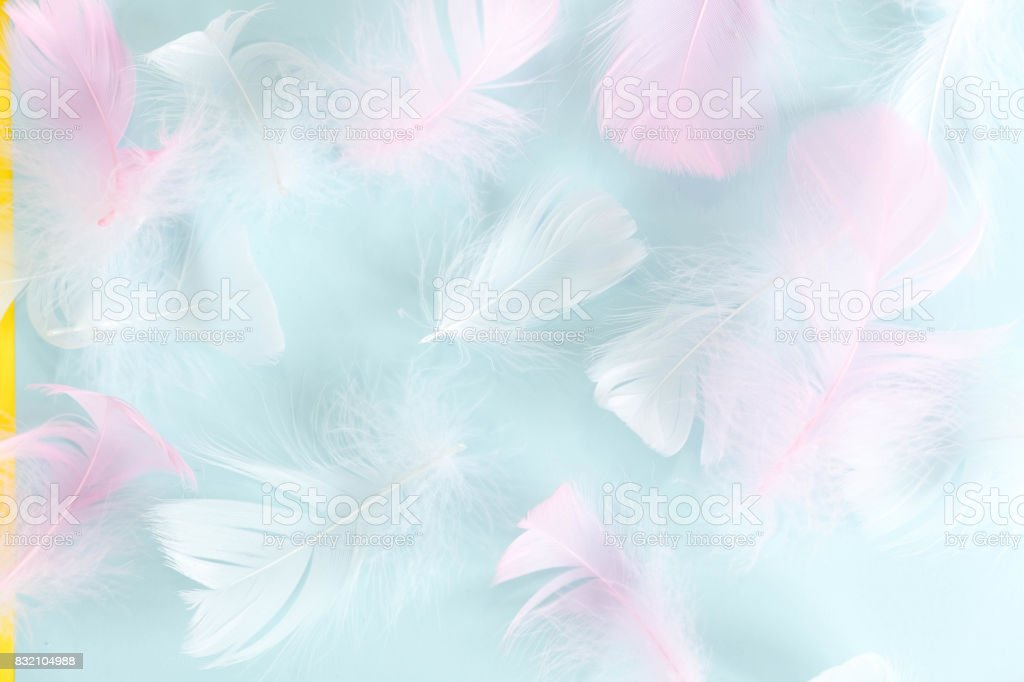 Feathers Abstract Background Background For Design With