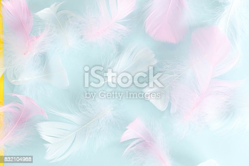 istock feathers abstract background. Background for design with soft colorfull feathers pattern. Soft fluffy feathers on turquoise, day dreaming concept. feather texture background Interior soft luxury 832104988