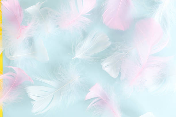 feathers abstract background. Background for design with soft colorfull feathers pattern. Soft fluffy feathers on turquoise, day dreaming concept. feather texture background Interior soft luxury stock photo