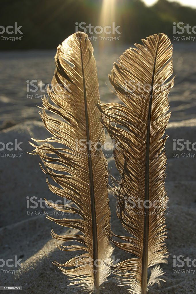 feathers against the sun #3 royalty-free stock photo