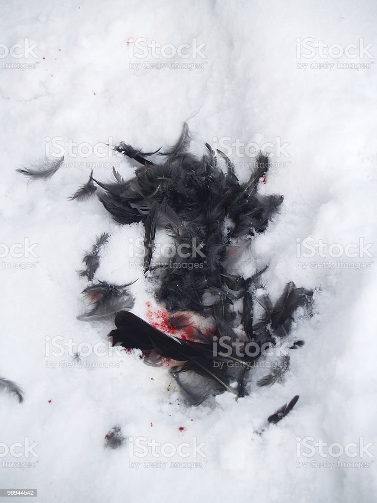 feathers and blood royalty-free stock photo