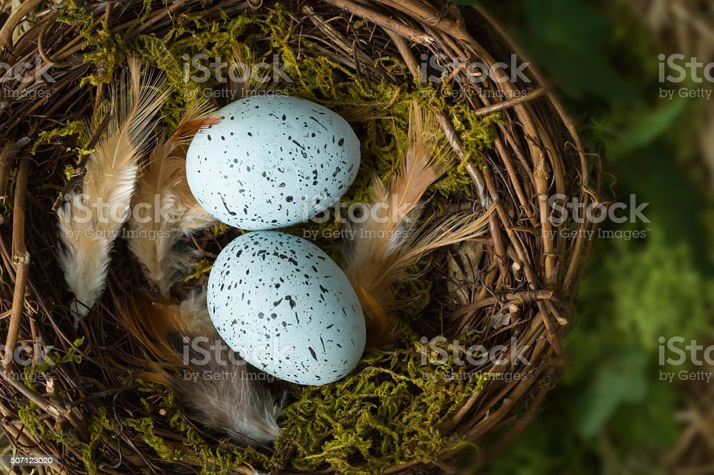 Feathers and eggs in nest stock photo