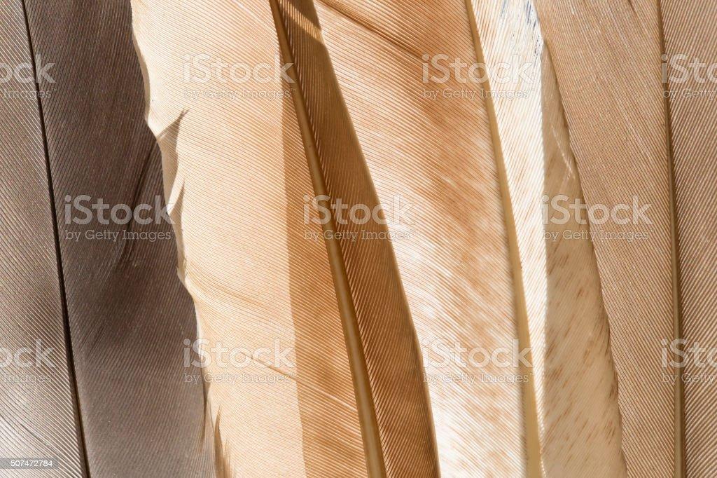 Feathers background stock photo