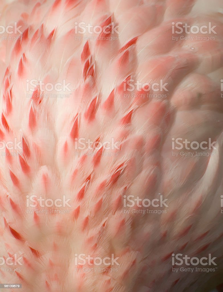 Feathers Background royalty-free stock photo