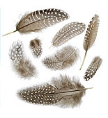 8 feathers on white background