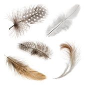 Collection of five bird feathers on pure white background