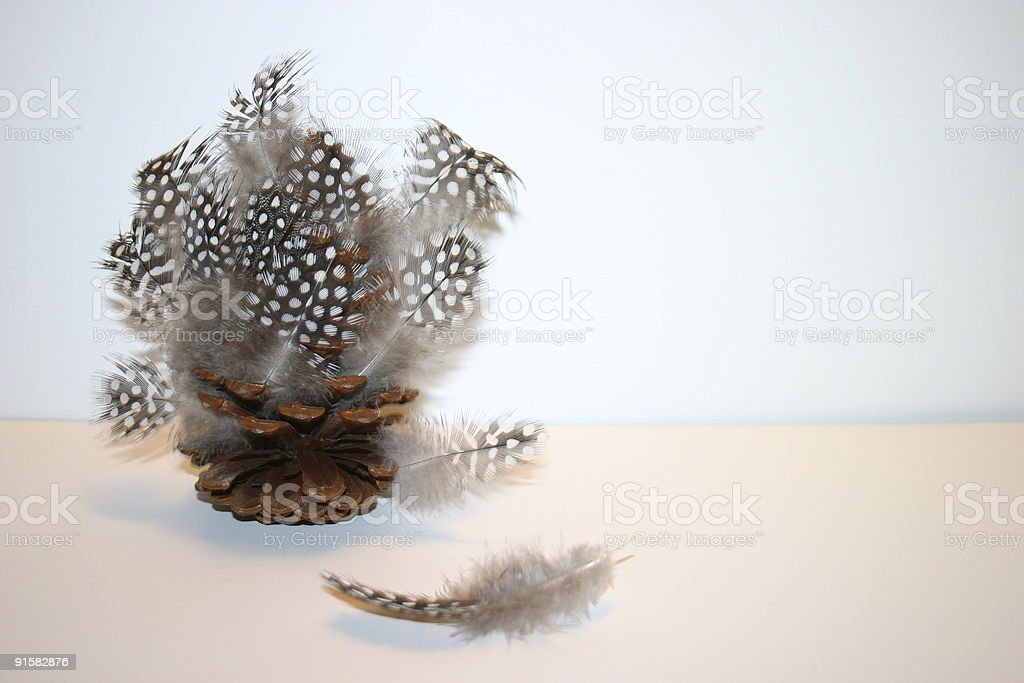 Feathers in  the pinecone royalty-free stock photo