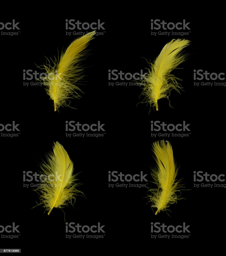Feathers isolated on Black royalty-free stock photo