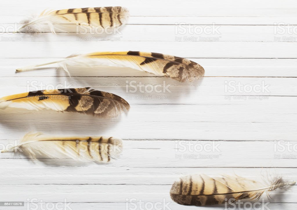 Feathers of a bird on a wooden background royalty-free stock photo