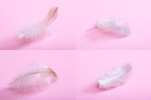 Feathers on a pink background. stock photo