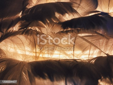 Feather, backgrounds, photography, horizontal, vintage, light, abstract,