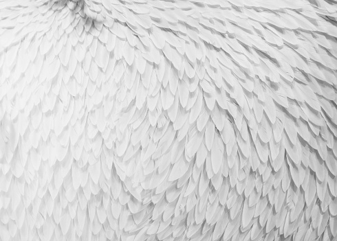set of different feathers isolated on white background