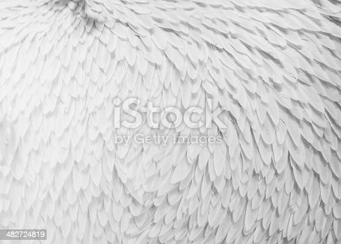 abstract solf white feathers floating in the air
