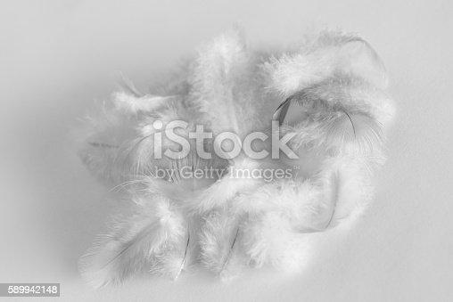 istock Feathers 589942148