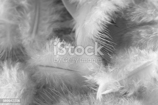 istock Feathers 589942206