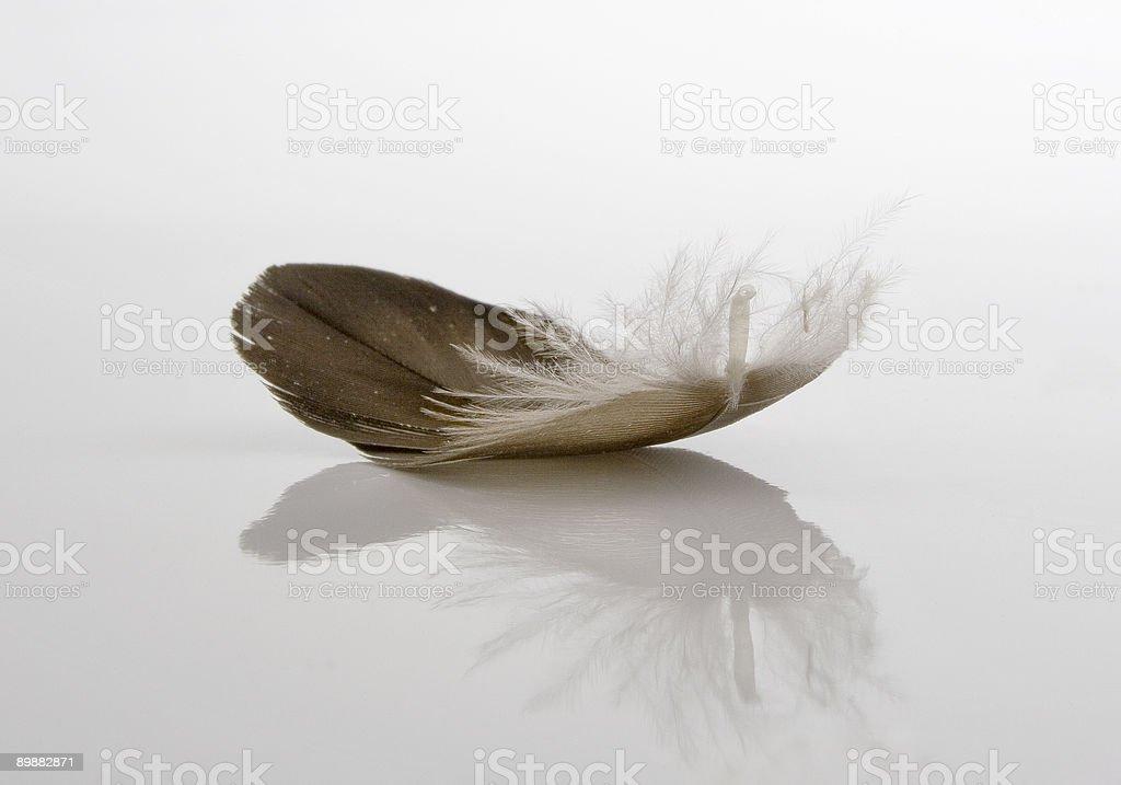 Featherweight stock photo