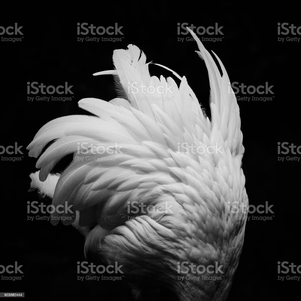 Feathery bird stock photo